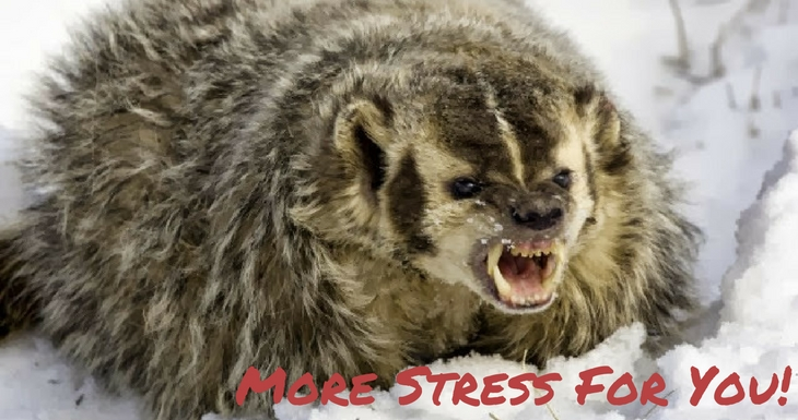Attack of the Stress Badger